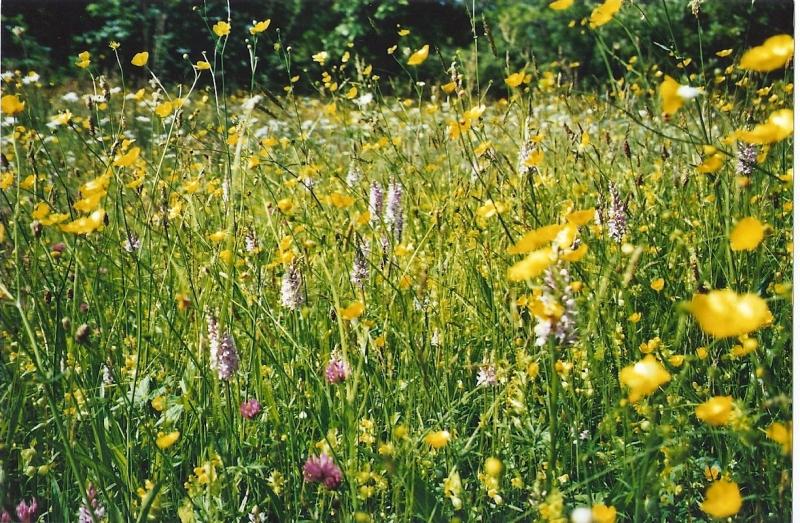 Meadows3