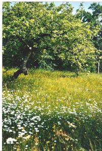 Meadows 4